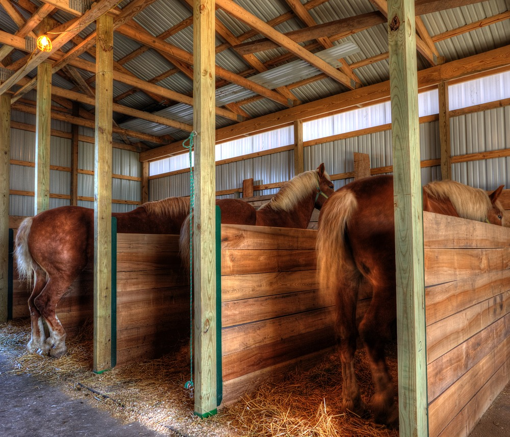 Draft Horse Barn At Old Fashioned Day