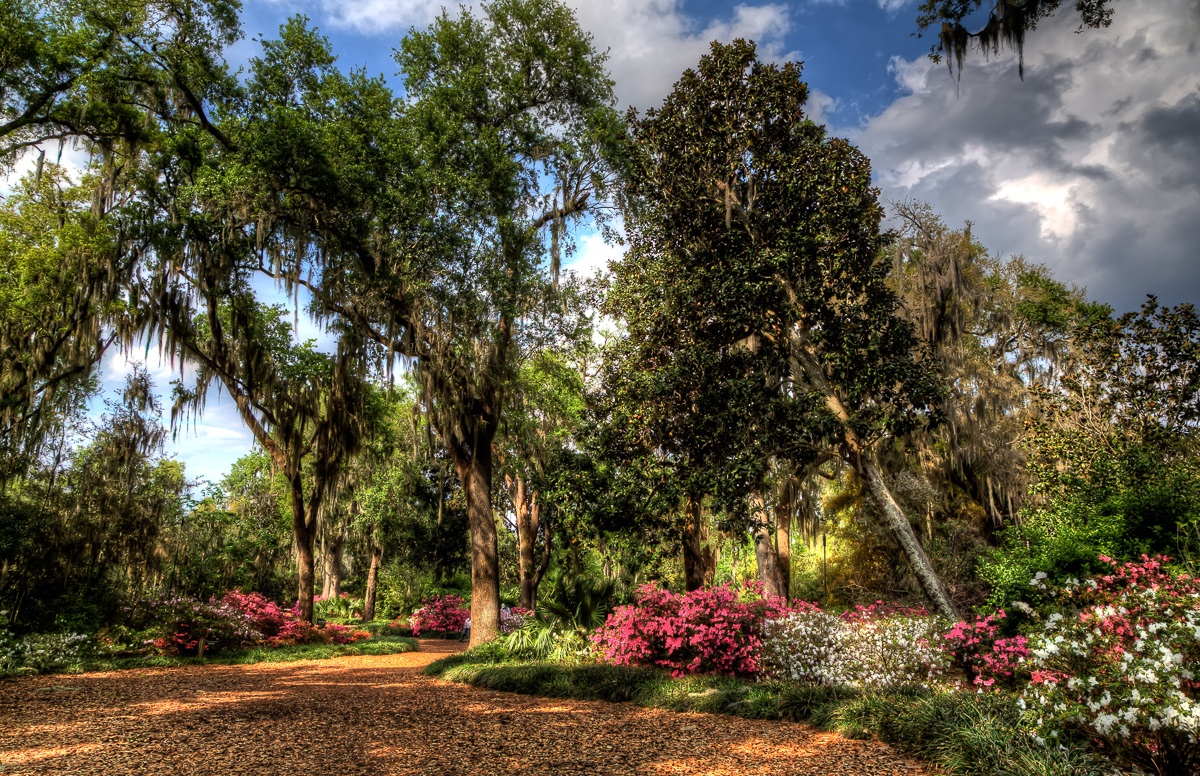 Azaleas Blooming at Bok Tower Gardens | Jazzersten\'s HDR Blog